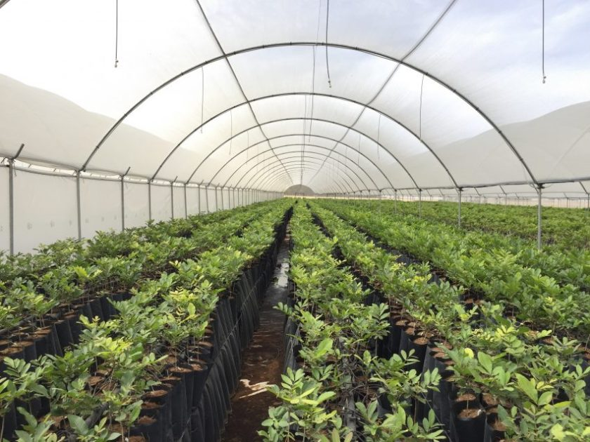 South Africa -- pecan-nut-tree-nursery-using-explogrow-biofertiliser