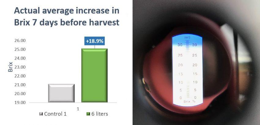 32.56% Increased Sugarcane Yield using SumaGrow pic 4