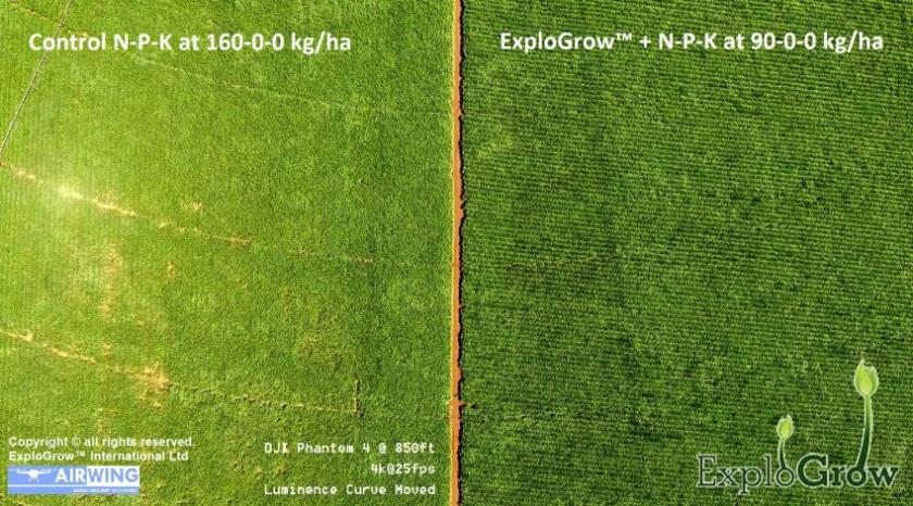 32.56% Increased Sugarcane Yield using SumaGrow pic5