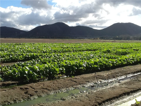 Joyful Farms Chinese Vegetables- Increased Harvest pic 5