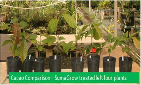 SumaGrow Improves BRIX Levels pic 1.jpg