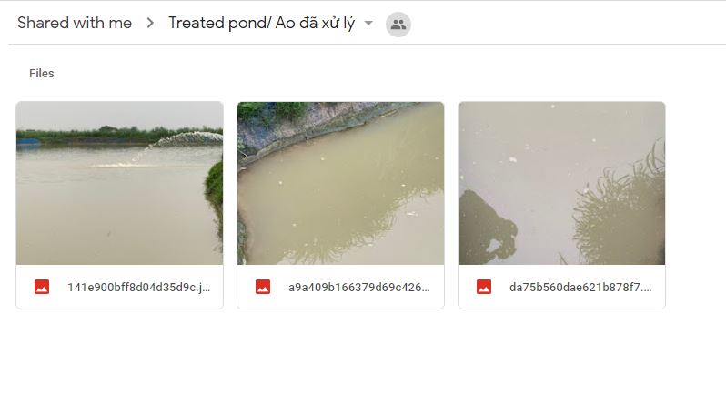 Vietnam Treated Pond Feb 2020