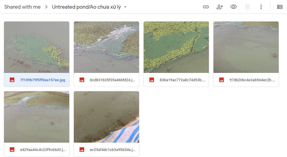 Vietnam Untreated Pond Feb 2020